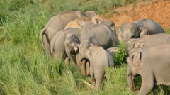 Elephant family Stock Footage