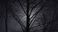 THE MOON BEHIND THE TREES Stock Footage