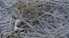 GRASS COVERED WITH FROST DOLLY Stock Footage