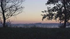 WILD SWAMP LANDSCAPE, SUNSET Stock Footage