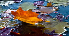 Bright Autumn Leaves in the Water 4K Stock Footage