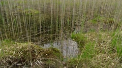 The lake which has become a swampThe lake which has become a swamp Stock Footage