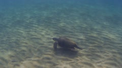 Underwater green sea turtle (Chelonia mydas) over sandy ground, slow mo Stock Footage