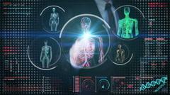 Businessman touching digital screen, blood, lymphatic,  circulatory system Stock Footage