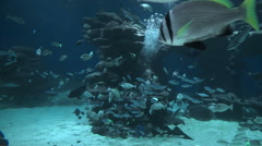 Fish swim under water in slow motion Stock Footage