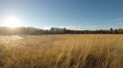 Long beautiful golden field in late autumn morning sunshine in the arctic circle Stock Footage