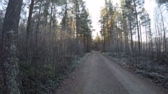 Wandering on a cold frozen forest dirt road surrounded by mighty pine trees Stock Footage