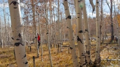 Man hunting with rifle in the woods Stock Footage