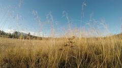 Beautiful calm golden strawns on field in late autumn sunshine Stock Footage