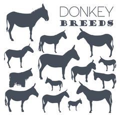 Donkey breeds icon set. Animal farming. Flat design Piirros