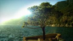 Single tree near the sea. Croatia, Hvar. Loop. Stock Footage