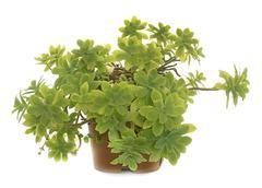 Succulent plant in studio Stock Photos