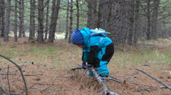 Small boy in pine forest Stock Footage