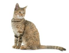 Tabby kitten in studio Stock Photos