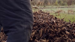 Janitor sweeping leaves in a garden Stock Footage