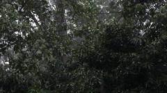 Bornean natural rainforest Stock Footage