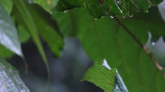 Waterdrop on rainy day in the rainforest Stock Footage