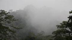Borneo Rainforest, cloudy day Stock Footage
