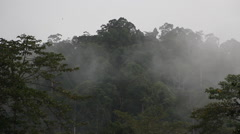 Cloudy Rainforest, Borneo Stock Footage