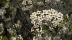 Flowering branches on a background of flowers and plans Stock Footage