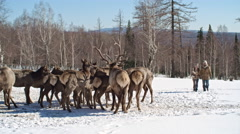 Feeding Deer in the Forest Stock Footage