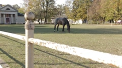 Grey Horse dolly shot Stock Footage