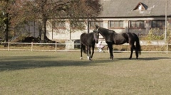 Horses pan shot Stock Footage
