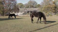 Black Velvet Horses Stock Footage