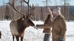 Lovely Couple Feeding Red Deer Stock Footage