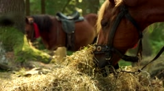 Two beautiful brown horses are eating hay Stock Footage