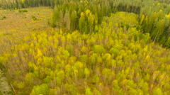 Aerial View. Flying over the forest trees autumn. Aerial drone shot. Arkistovideo
