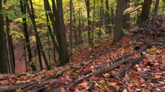 Autumn landscape of sunset colored trees and rust-colored leaves on the ground Stock Footage