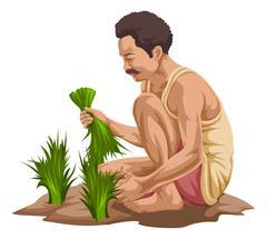 Vector of farmer plucking vegetables. Stock Illustration