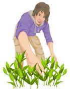 Vector of man plucking vegetables. Stock Illustration