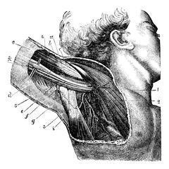 Region of the armpit, vintage engraving. Stock Illustration