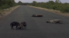 South africa hyena road Stock Footage