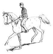 The Passage (riding horse), vintage engraving. Stock Illustration