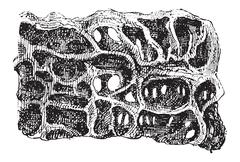 Nest of Ant or Formicidae, vintage engraving Stock Illustration
