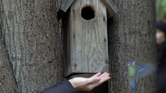 Bird titmouse feeding from hand and flies away next to birdhouse slow motion. Stock Footage