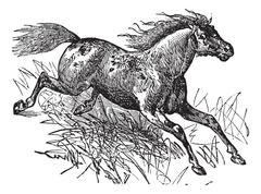 Mustang vintage engraving Stock Illustration