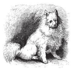 Husky vintage engraving Stock Illustration