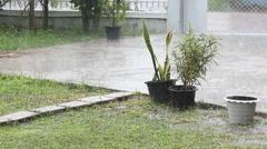 Rain on Sansevieria trifasciata in pot with copyspace wide shot Stock Footage