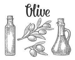 Bottle glass of Olive oil with cork stopper and branch with leaves Stock Illustration