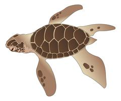 Sea Turtle, illustration Piirros