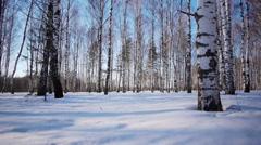 Trunks of birch trees in wintertime Stock Footage