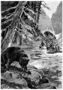 The bear shook his big head one last time, vintage engraving. Stock Illustration