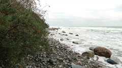 Sea-buckthorn bushes with fruits on shore of baltic sea at cape arkona Stock Footage