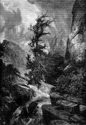 Hurricane. The largest cedars were twisted by the force of the wind, vintage  Piirros