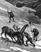 Lapps. The reindeer movements sometimes cranky, vintage engraving. Piirros