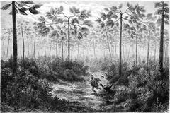 Sandis Club-mosses and trees (the Cow), vintage engraving Stock Illustration